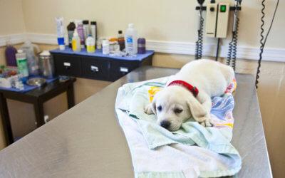 Come Curare e Gestire una Frattura di Animale