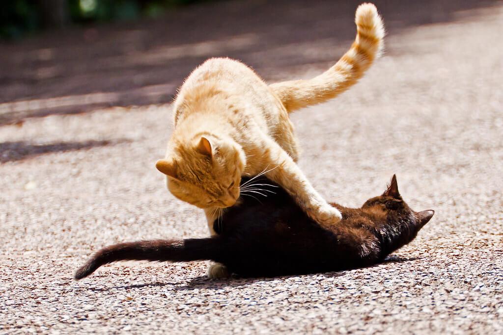 i gatti portano malattie alluomo