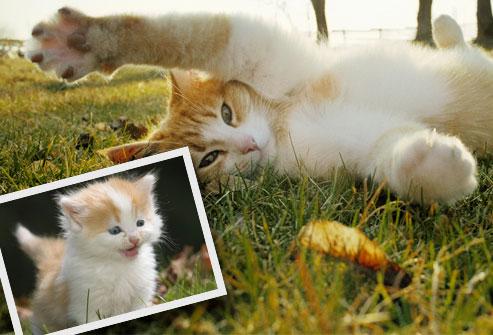book fotografico gatto