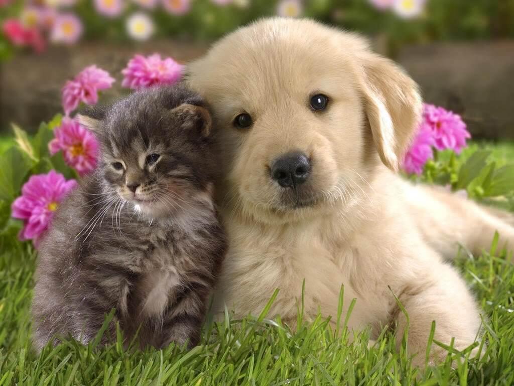 cane e gatto come vivere insieme