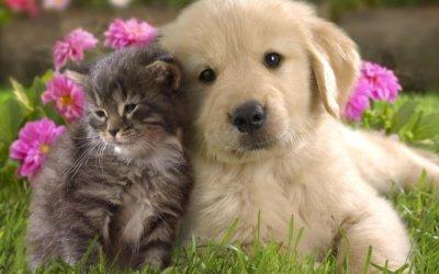 Come far vivere bene insieme cane e gatto