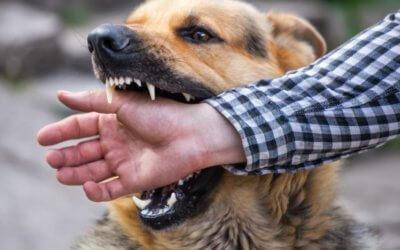 Il mio cane ha morso una persona – Come fare