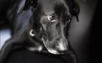 Come approcciare un cane spaventato, timido o aggressivo