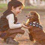 cani e bambini giocano insieme sicuri