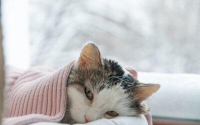 Sintomi della febbre nel Gatto, cura e prevenzione