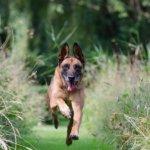 forasacchi cane cura e prevenzione