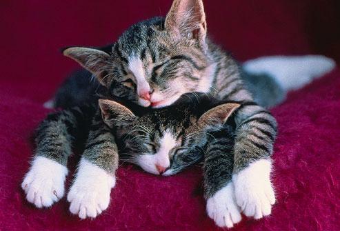 compagnia di due gatti