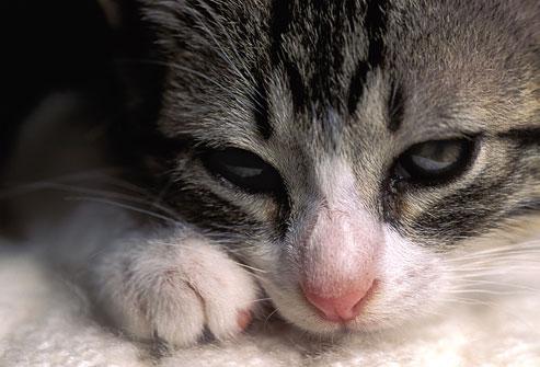 gatto malato - doctorvet cartella clinica