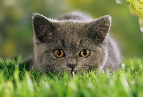 gatto predatore doctorvet
