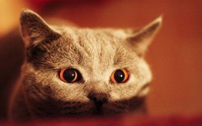 Come comportarsi con i gatti timidi, impauriti o spaventati