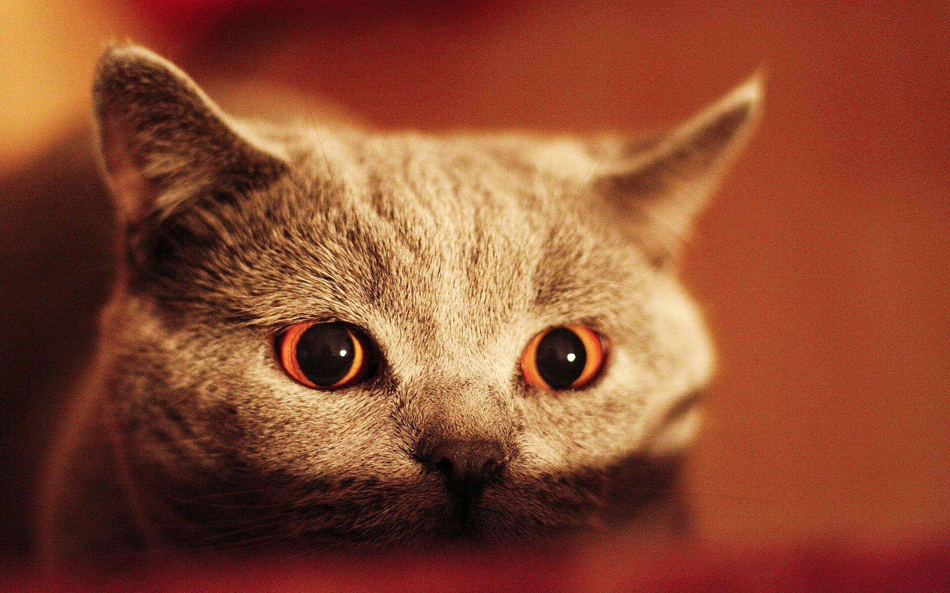 Costruire Lettiera Per Gatti come calmare gatti timidi, impauriti e spaventati | doctorvet