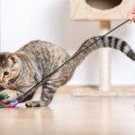 giocare con il gatto doctor vet