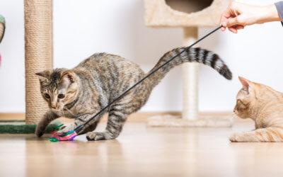 Come giocare e arricchire la vita del tuo gatto