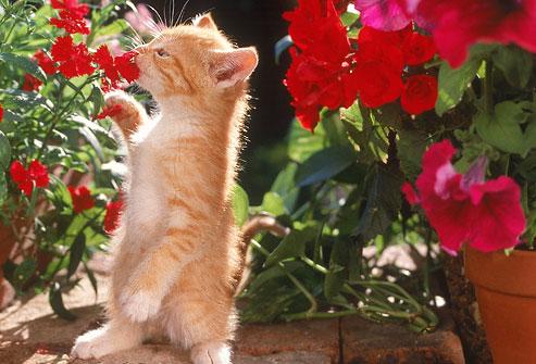piante dannose per il tuo gatto