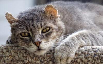 Cambio di comportamento nei gatti che invecchiano