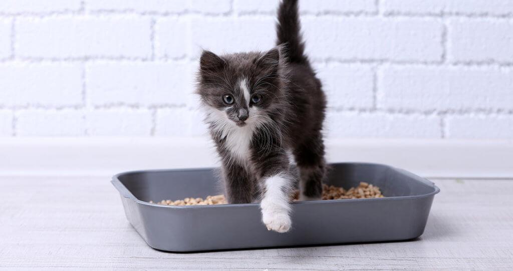 risoluzione problemi lettiera gatto dr vet