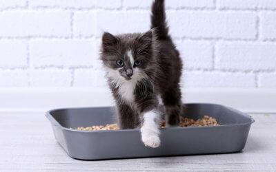 Come risolvere i problemi dei gatti con la lettiera