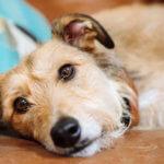 salmonellosi cane e gatto cura e prevenzione