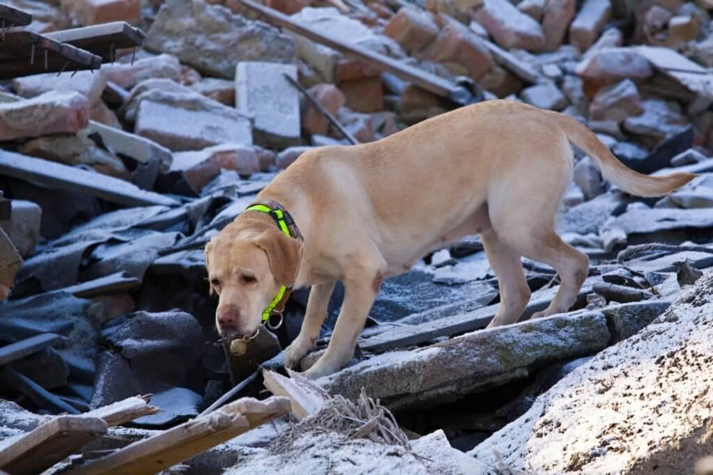 sicurezza in caso di emergenza cane e gatto