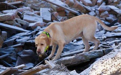 Sicurezza degli animali in caso di emergenza