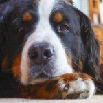 sterilizzazione castrazione cane doctorvet