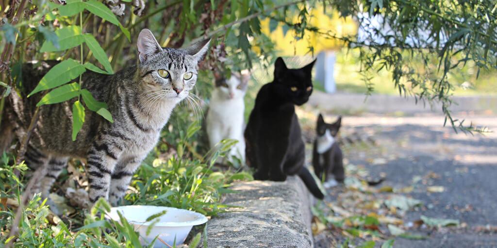 sterilizzazione castrazione gatto maschio femmina