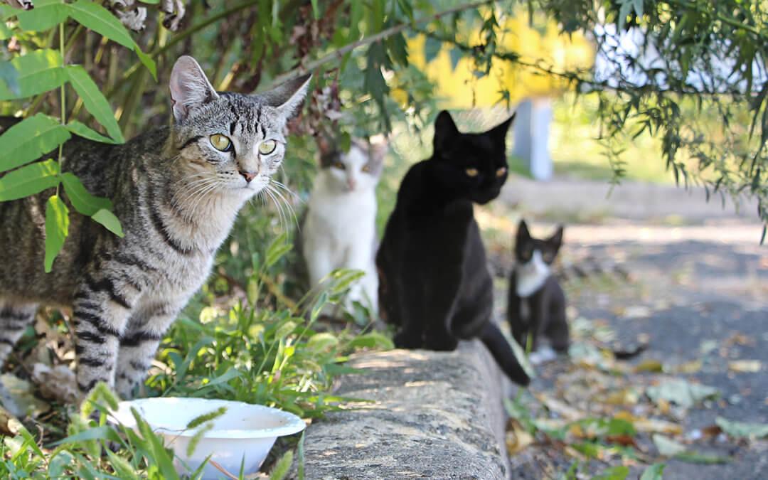 Sterilizzazione e Castrazione Gatto, come e perchè