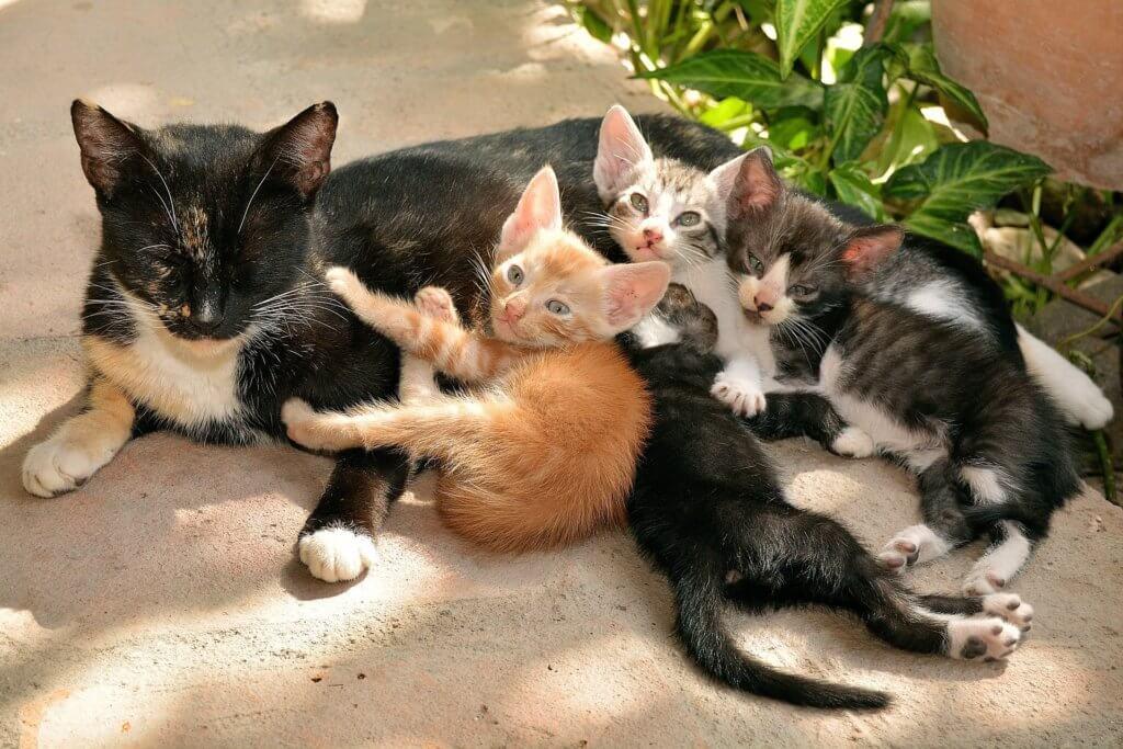 svezzamento gatti gattini doctor vet
