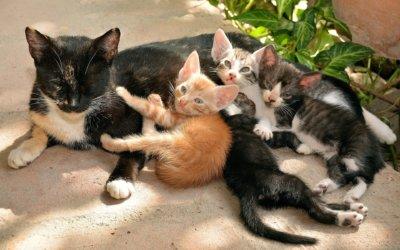 Come svezzare un gatto: dal latte al cibo secco