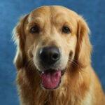 attacchi epilettici e convulsioni nei cani