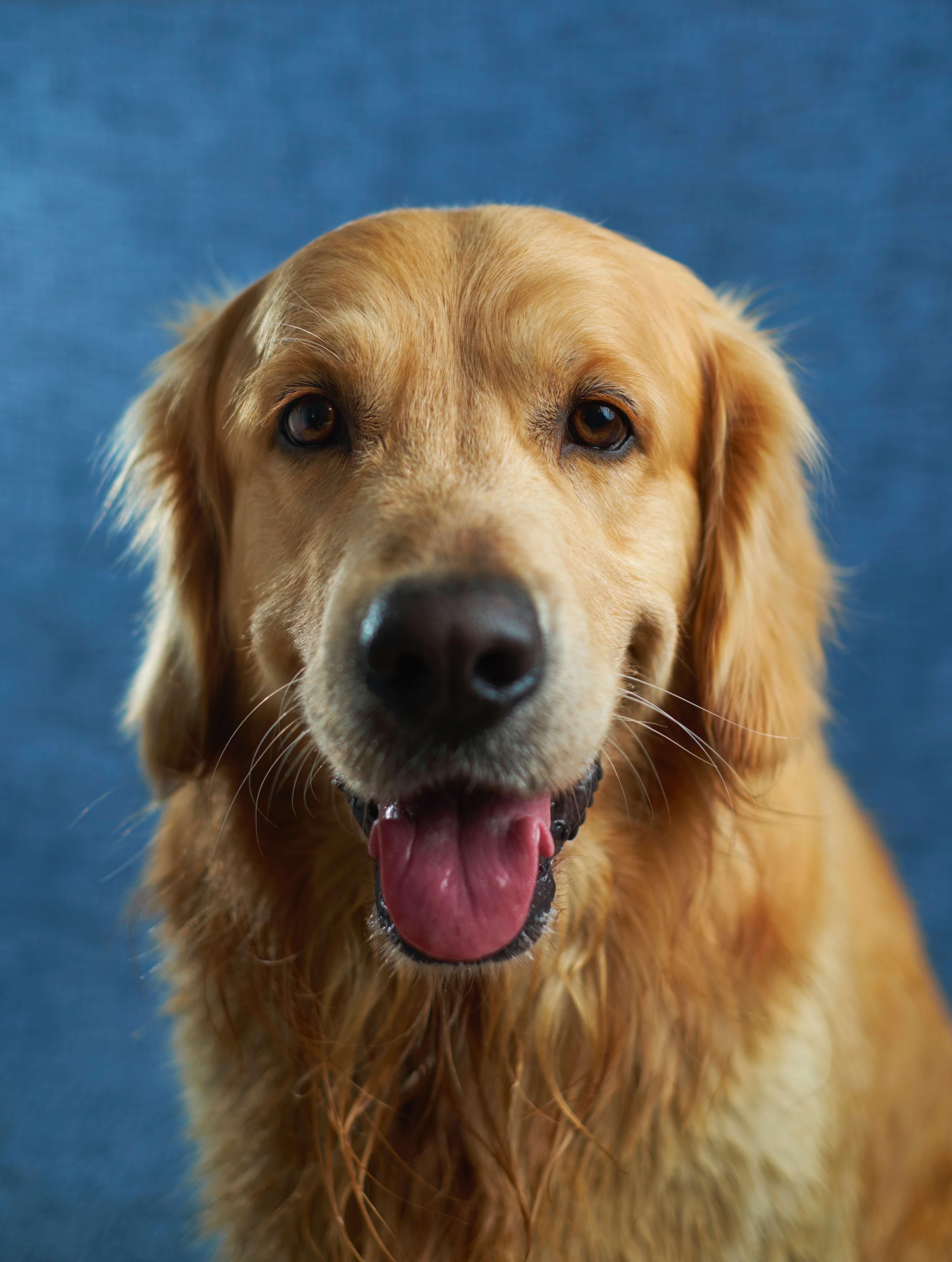 provoca minzione frequente nei cani