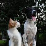 avvelenamento da candeggina negli animali domestici