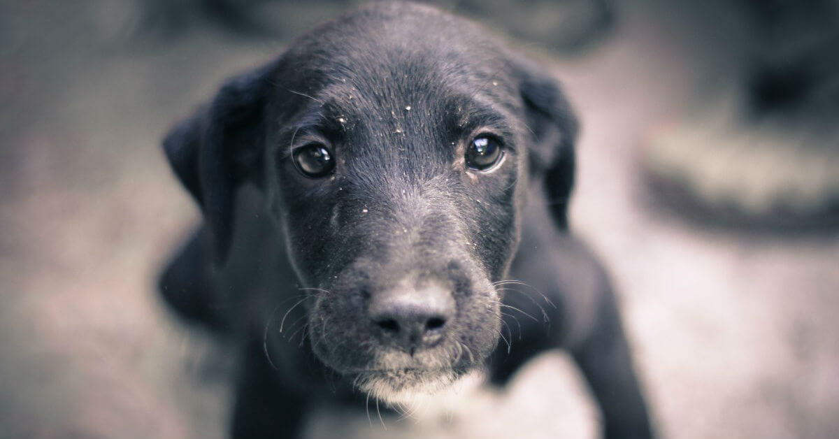 gastroenterite-acuta-cane