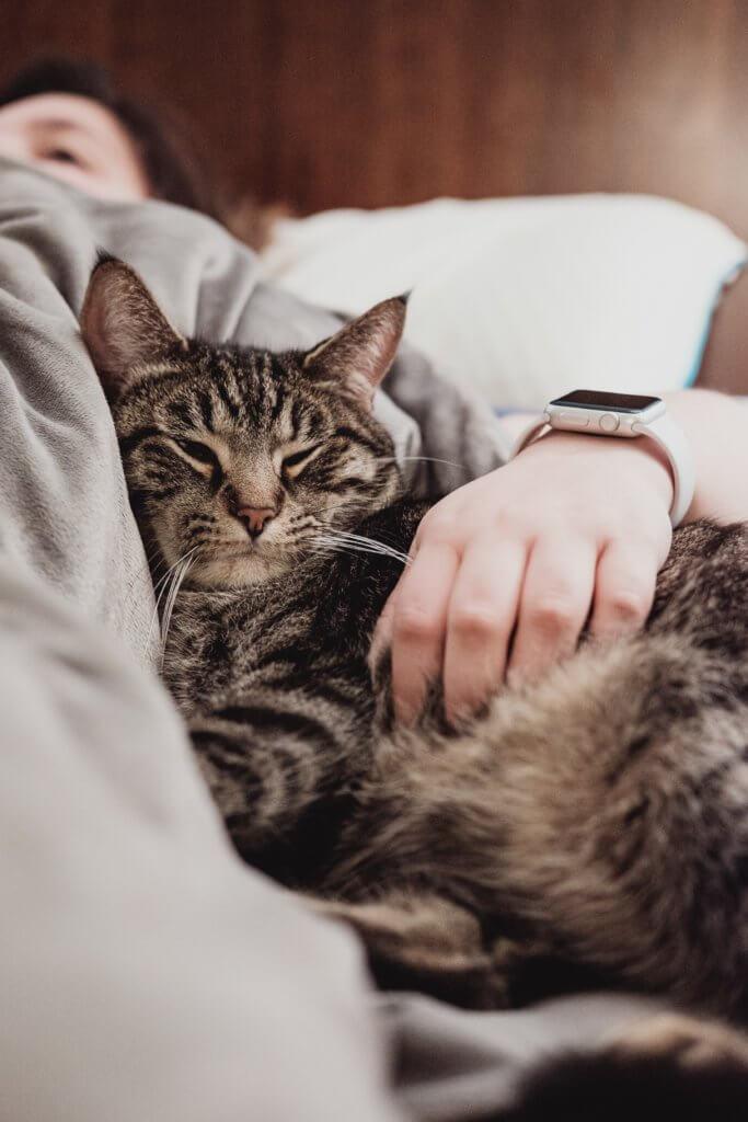 gatto con la diarrea dr vet