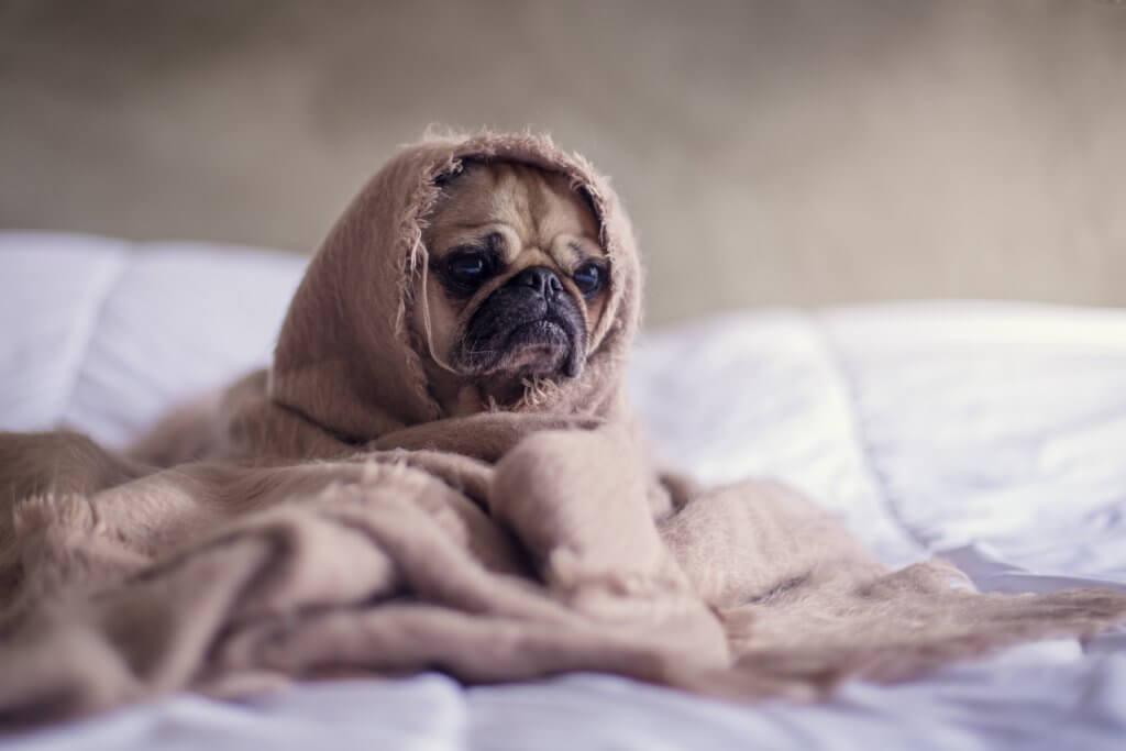 la gastroenterite nel cane sintomi diagnosi e terapia