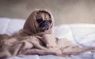La Gastroenterite nel Cane: Sintomi, Cura e Prevenzione