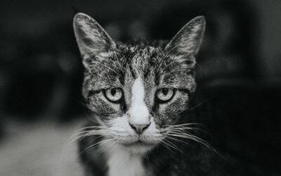 La gastroenterite nei gatti: sintomi, diagnosi e trattamenti
