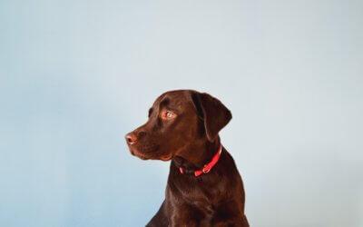 Respirazione artificiale per cani