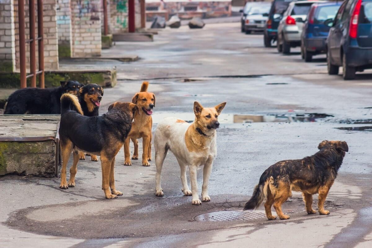 cani-randagi-sterilizzazione-castrazione