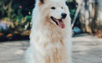 Cardiopatia (cardiomiopatia ipertrofica) nei cani