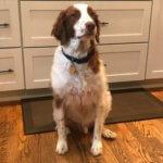 come trattare ustioni e scottature dei cani