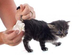 gatti e diarrea)