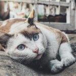 emergenze comuni nei gatti adulti sintomi e rimedi
