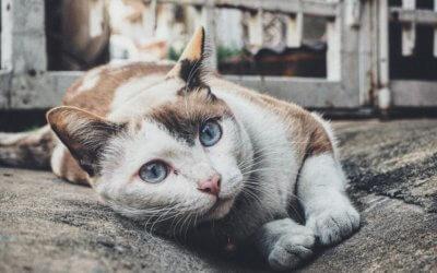 Emergenze comuni nei gatti adulti