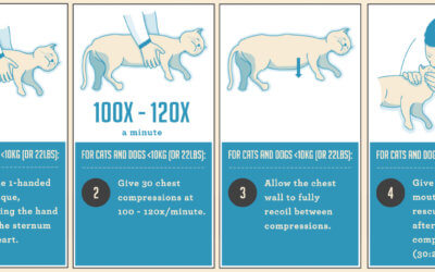 Come fare la manovra di Heimlich sul gatto
