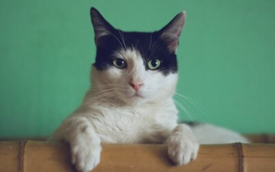 Costipazione del gatto, cause e rimedi