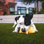 cane ingestione sostanze tossiche e veleno