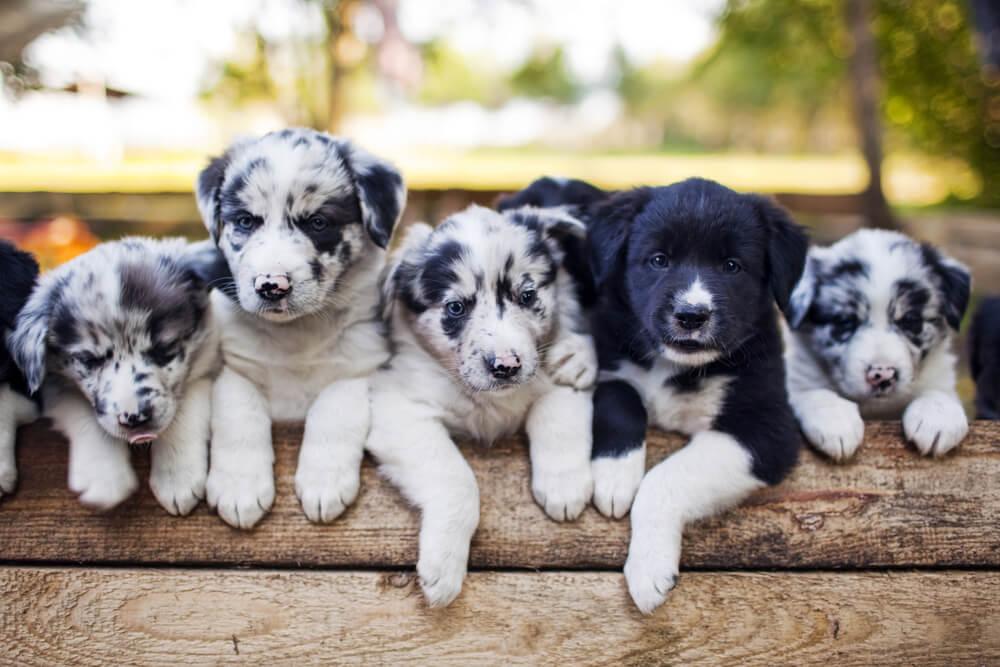 vaccinazioni obbligatorie cane