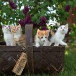 riabilitazione cardiopolmonare e respirazione artificiale nei gattini