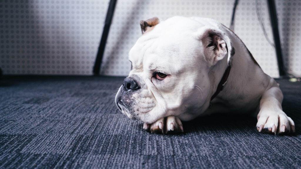 elenco delle sostanze tossiche che causano avvelenamento nei cani